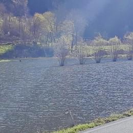 """Balisio, dopo la pioggia il lago """"effimero""""  Coldiretti: «Sommerse tutte le semine»"""