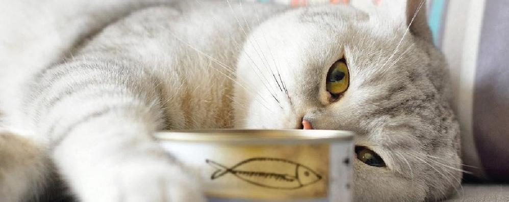 Tra sardine e gattini  i media delirano