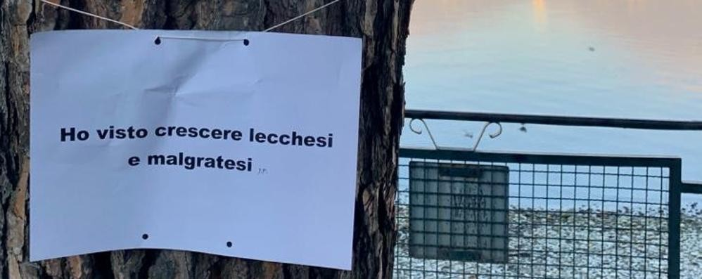 Messaggi sui tronchi   per salvare i pini