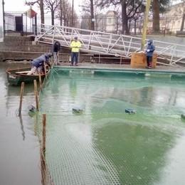 Cormorani dell'Adda furbi come volpi  Ecco come beffano le reti dei pescatori