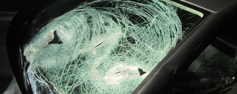 In 10 giorni 12 incidenti  Pericolo cervi sulle strade