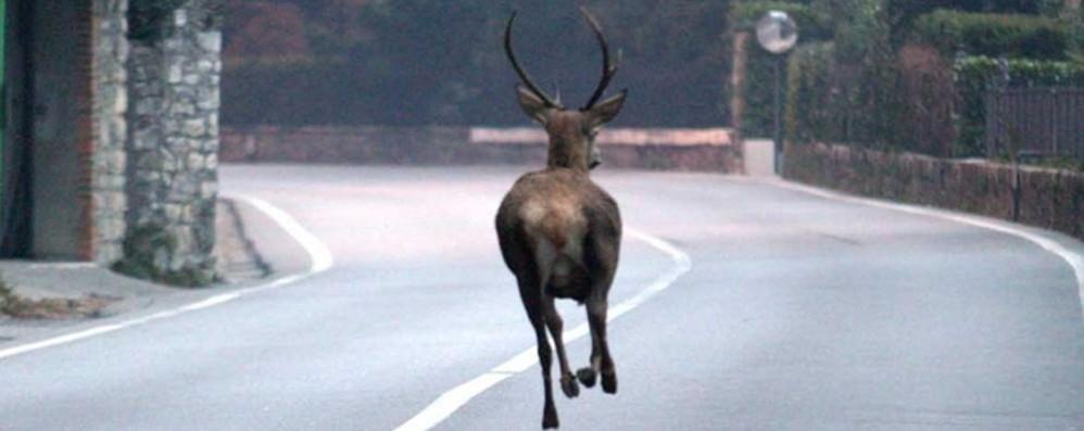 """Basta animali investiti sulle strade  Stanno arrivando gli """"spaventa-cervi"""""""