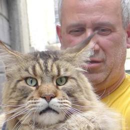 «Io e miei due gatti giganti  portati a spasso al guinzaglio»