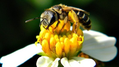 La start-up comasca 3Bees vince bando Ue con progetto su api
