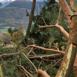 Prezzi del legname in calo, la beffa della tempesta Vaia