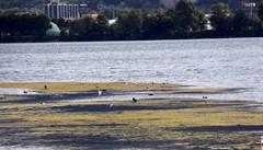 Battaglia contro le alghe  Tessuti sul fondo del lago