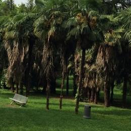 Manutenzione del verde  Villa Confalonieri si rinnova
