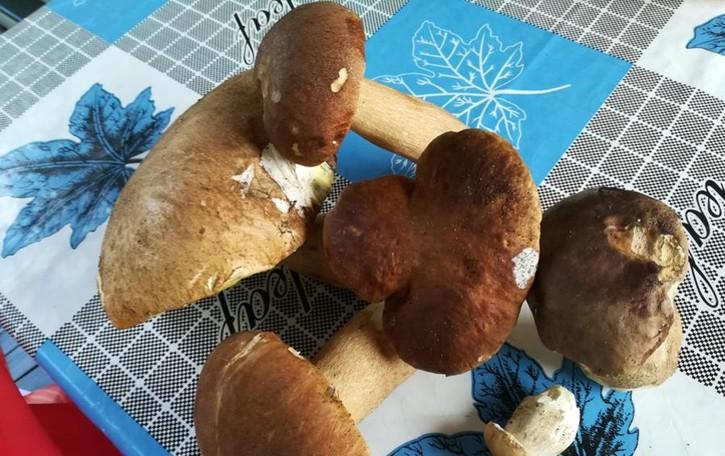 Pranzo a base di funghi  Dodici in ospedale