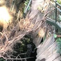 Nell'Orrido cade un grosso platano   Distrutto un tratto della passerella