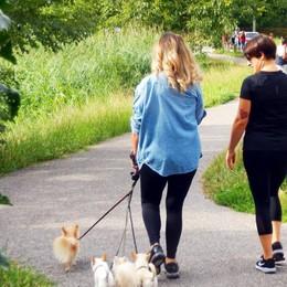 «Cani senza guinzaglio lungo le sponde»  Al lago del Segrino divampa la polemica