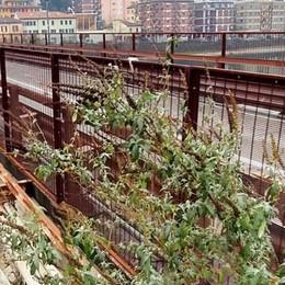 Lecco. Sporcizia e arbusti  Povero Ponte Vecchio