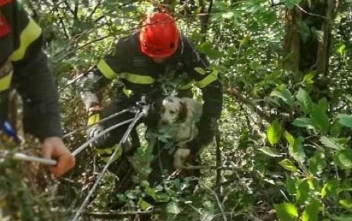 Giù nel dirupo a Monte Marenzo  Zara salvata dai pompieri