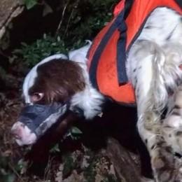 Cani finiscono in un dirupo a Mandello  Intervengono i vigili del fuoco