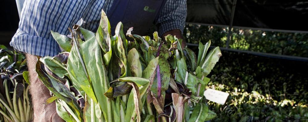 Bio: Ifoam-Ue, obiettivo superfici agricole al 20% al 2030