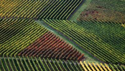 Da Ue ok a aiuti di Stato Francia per aziende agricole green