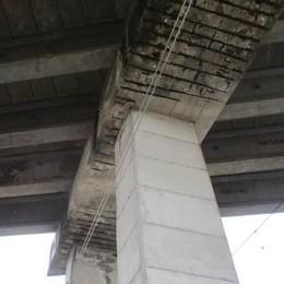 Bisonti sul ponte di Osnago  Il sindaco tira le orecchie alle aziende