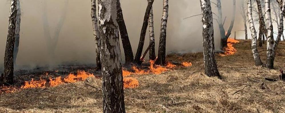 Livo, incendio sui monti  Distrutti otto ettari di bosco