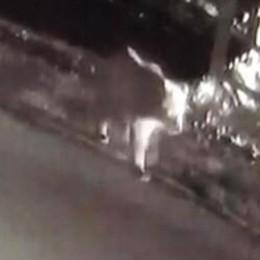 Livigno, l'orso vien di notte  E ribalta i cassonetti (video)