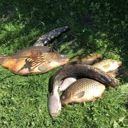 Merate, quintali di pesci morti a Sartirana  Sotto accusa ossigeno e inquinanti