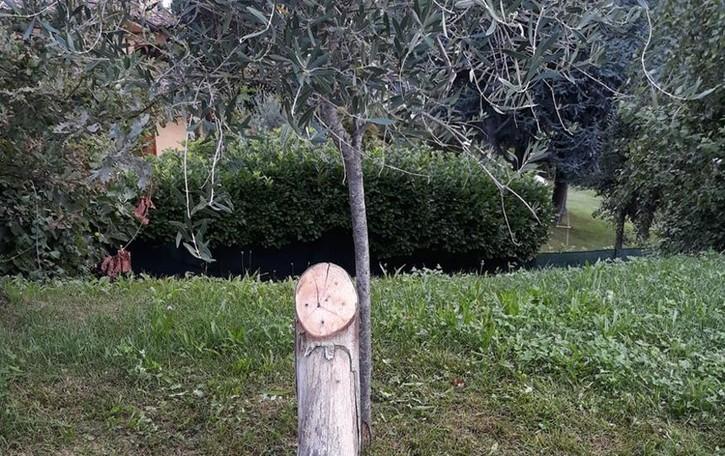 Viganò, Sparita la targa di Falcone  Era stata posizionata dai bambini