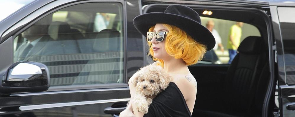 Hollywood a Oliveto,   arriva Lady Gaga