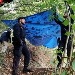 Blitz dei carabinieri nei boschi di Rogeno  In un bivacco trovati droga e un machete