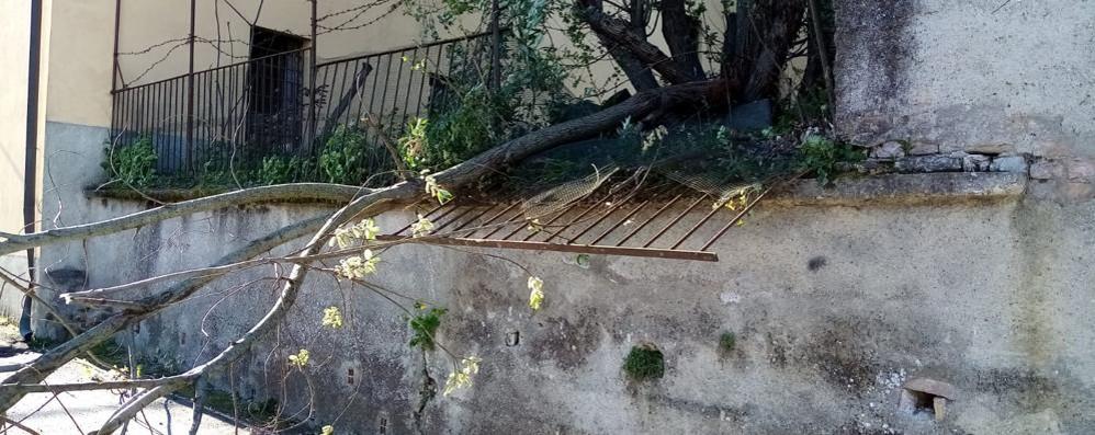 Vento da far paura  Si schianta un albero