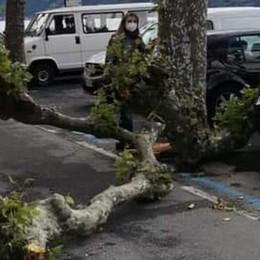 Bellano, ramo  cade vicino a una passante  «Era una pianta sana, ora le verifiche»