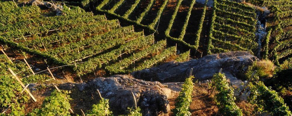 Lecco, Intesa Ue sul vino annacquato  «Non esiste, tanto rumore per nulla»