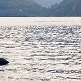 Nuotatore disperso in alto Lario  Serata di ricerche nel lago di Piona